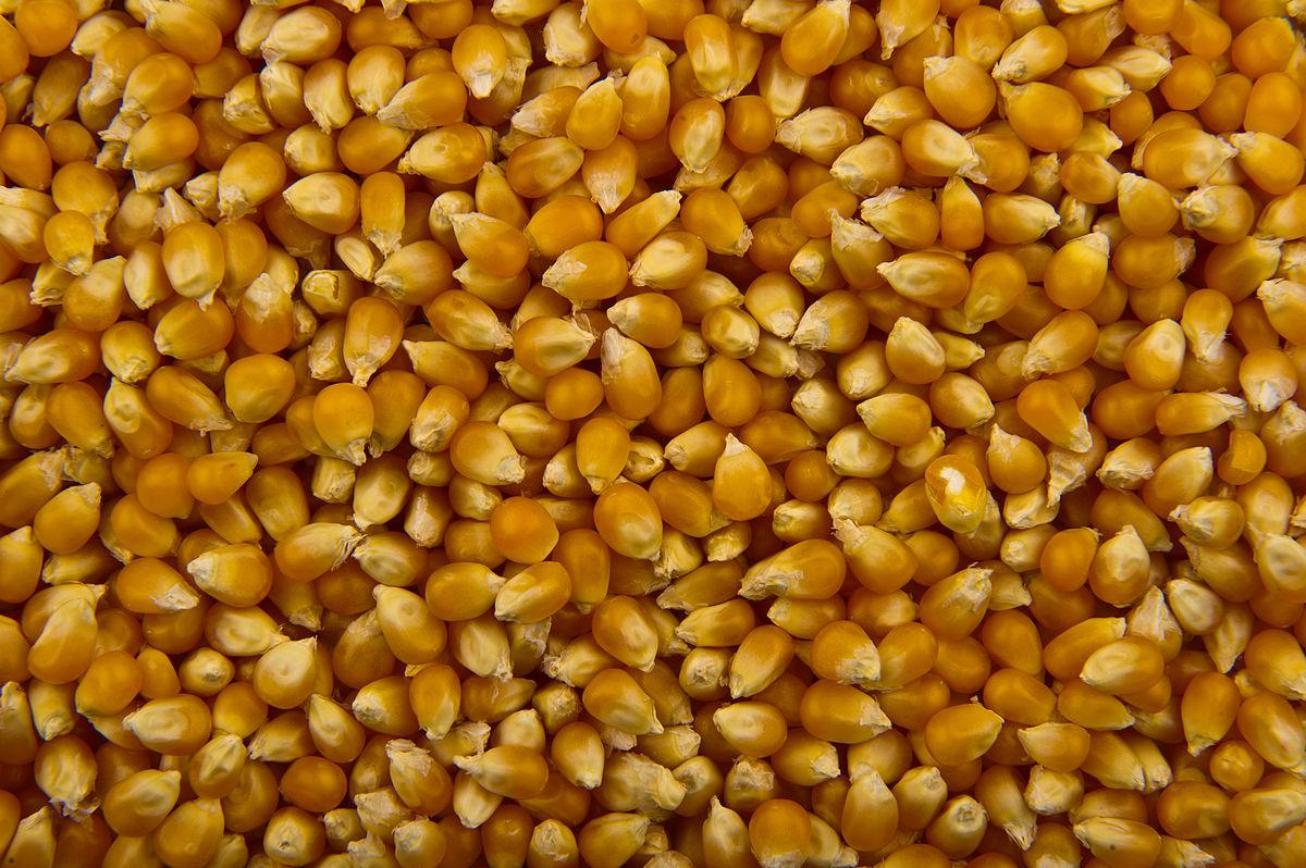 Cara Membuat Popcorn Manis Aneka Warna